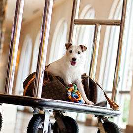 small dog on a baggage cart